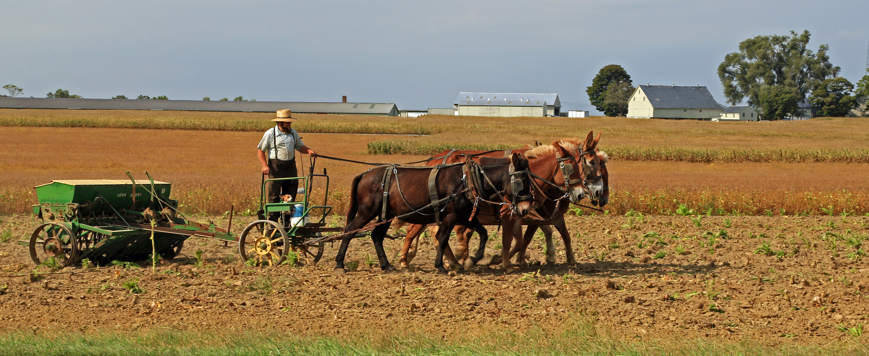 amish assimilation in the united states How to keep warm, the amish way by  and pandora have swept the eastern and southern united states in icy  an accelerated assimilation with.